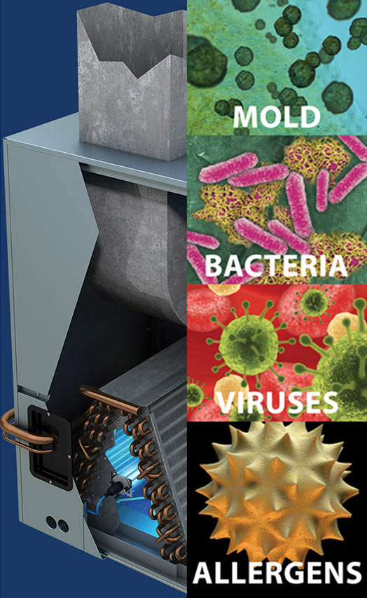Mold Bacteria Viruses Allergens Graphic